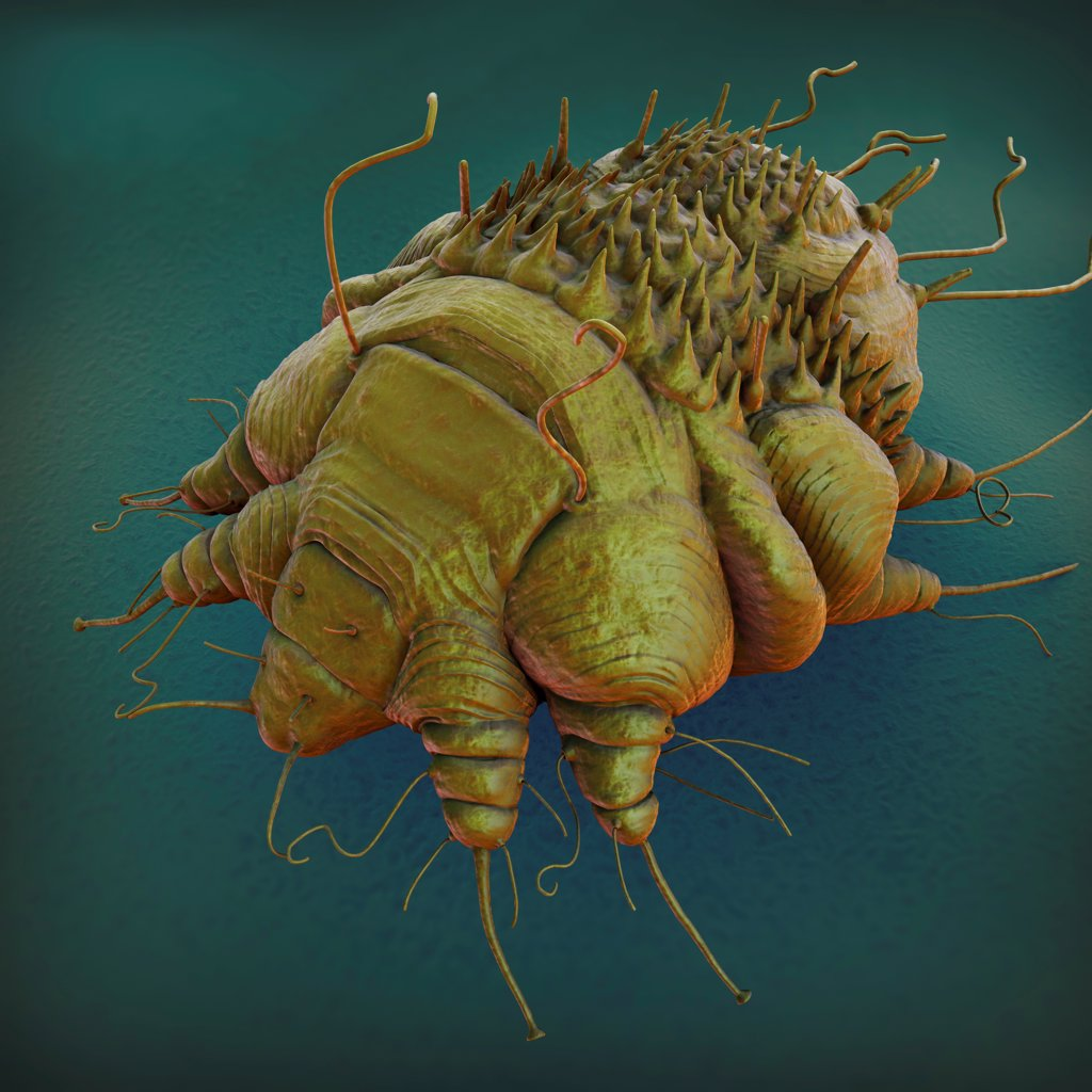 Stock Photo: 4378-2495 A close up view of the cause of scabies - the mite Sarcoptes scabiei.