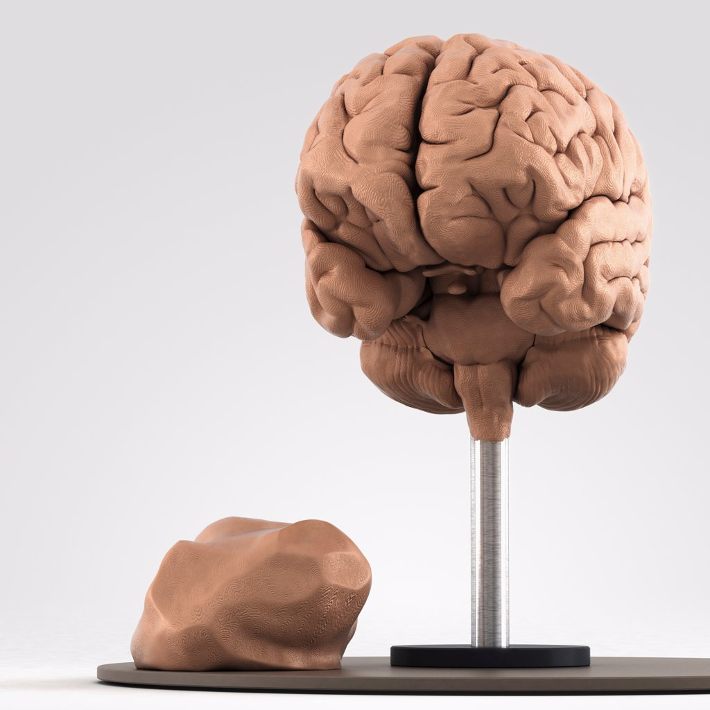 Clay model showing the anatomical structure of a brain. : Stock Photo