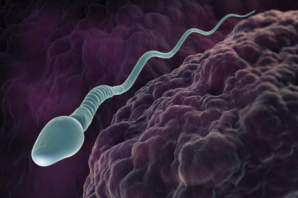 A single male sperm cell swimming in the fallopian tube. : Stock Photo