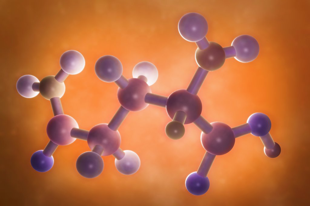 A molecular model of glutamine. : Stock Photo
