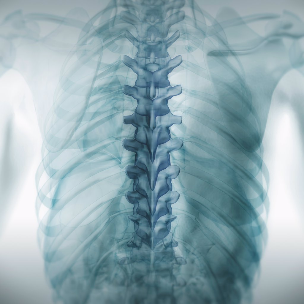 Stock Photo: 4378-3757 Rear view of the anatomy of the back with transparent skin revealing the internal anatomy. Note the spinal anatomy is highlighted.