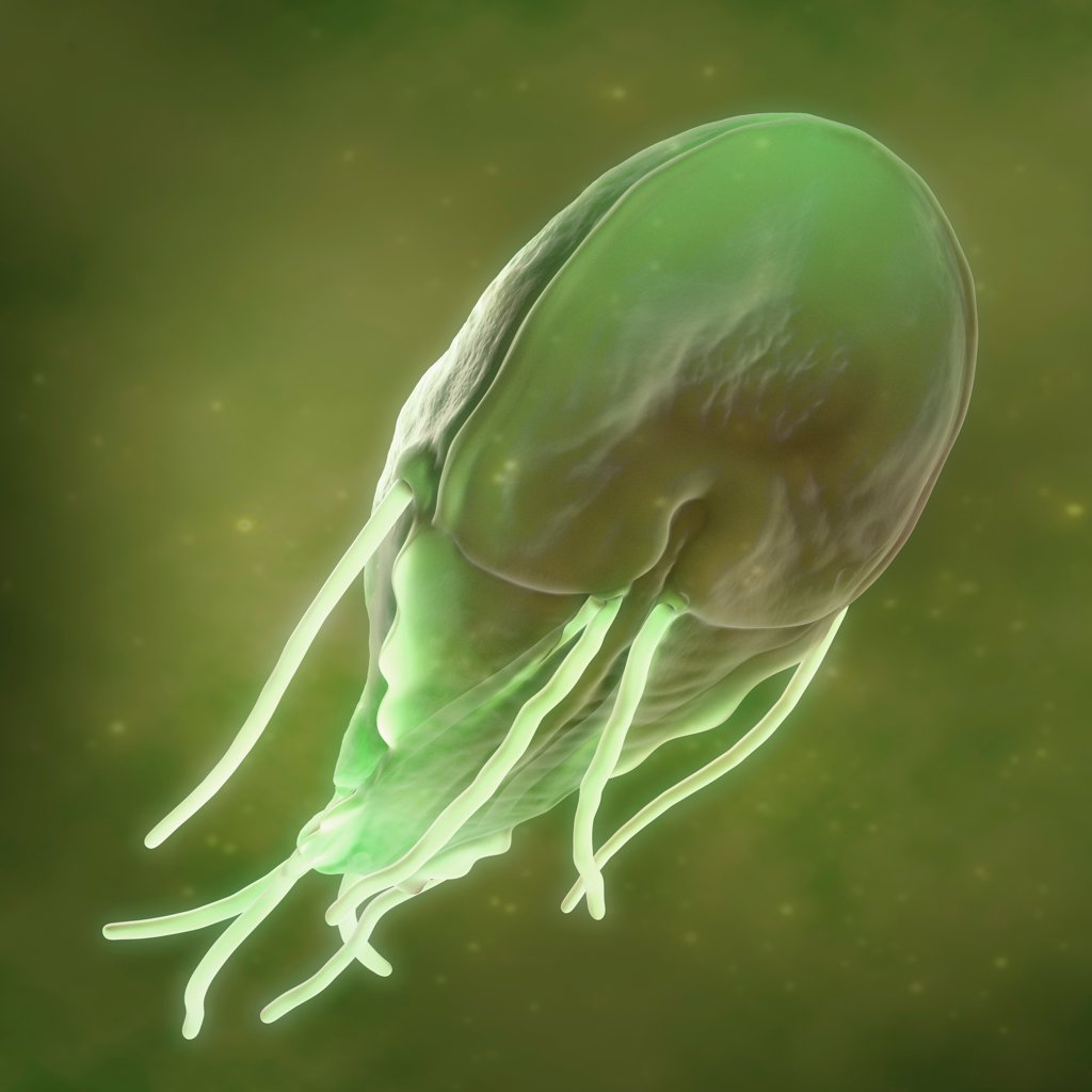 Stock Photo: 4378-3893 Giardia lamblia is a flagellated protozoan parasite. It colonizes and reproduces in the small intestine and causes giardiasis.
