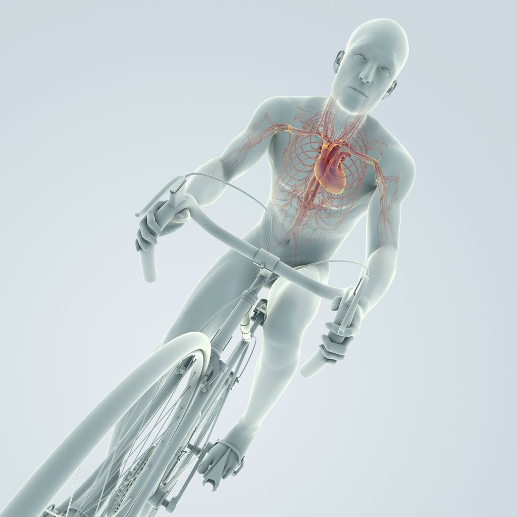 Stock Photo: 4378-3913 Male figure cycling a bicycle with internal anatomy of the heart is visible in the chest.