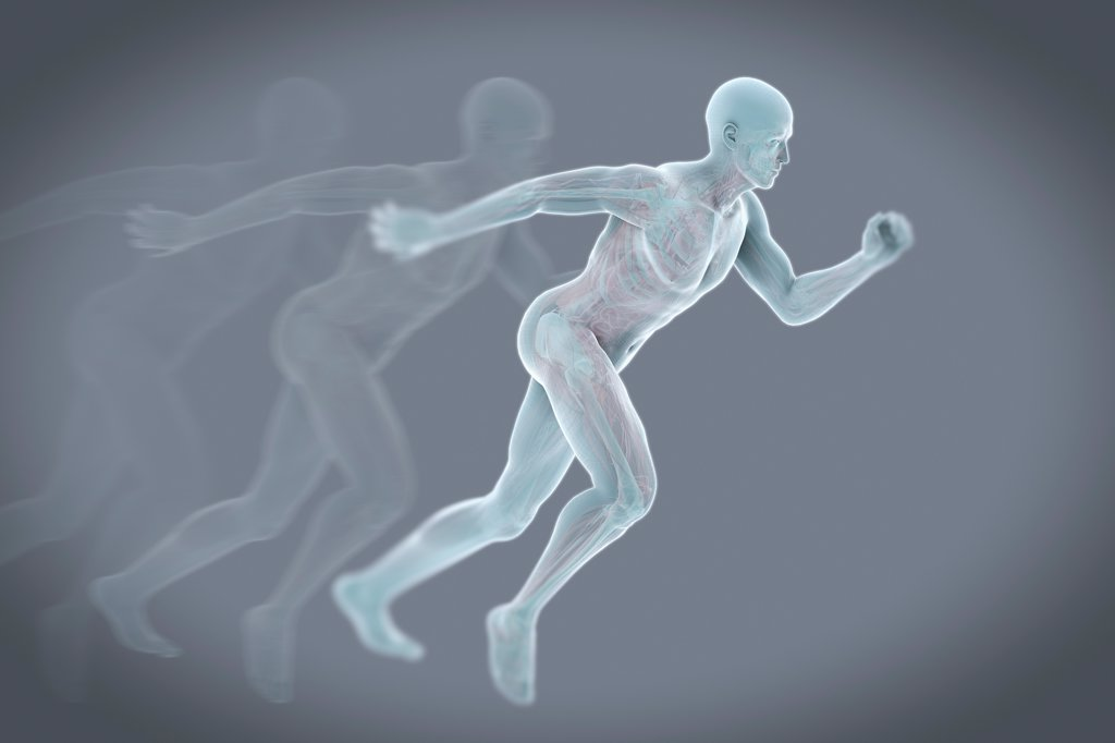 A running male figure with transparent skin to reveal the inner anatomical structures. : Stock Photo