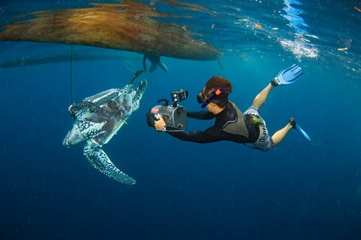 Stock Photo: 4379-113 Photographing Dead Leatherback Turtle Floating Underwater