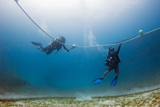 Stock Photo: 4379-393 Divers working on a project about turtle exclusion devices (TEDs) film while holding on to a trawl net as it is dragged across the sea floor.