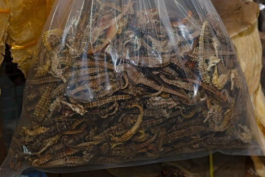 Stock Photo: 4379-754 A bag of dried seahorses for sale, in a seafood shop, Kota Kinabalu, Sabah, Borneo, Malaysia.