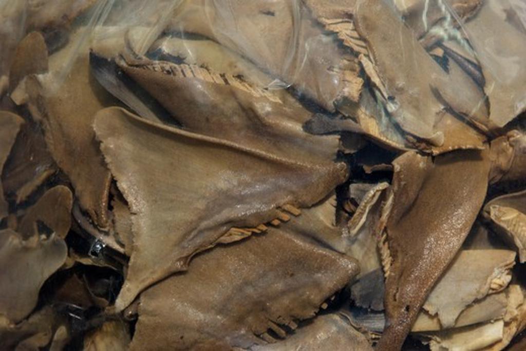 Stock Photo: 4379-755 A bag of dried shark fin for sale, Kota Kinabalu, Sabah, Borneo, Malaysia.