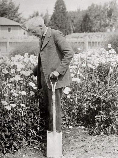 Stock Photo: 4388-158 American Horticulturalist Luther Burbank
