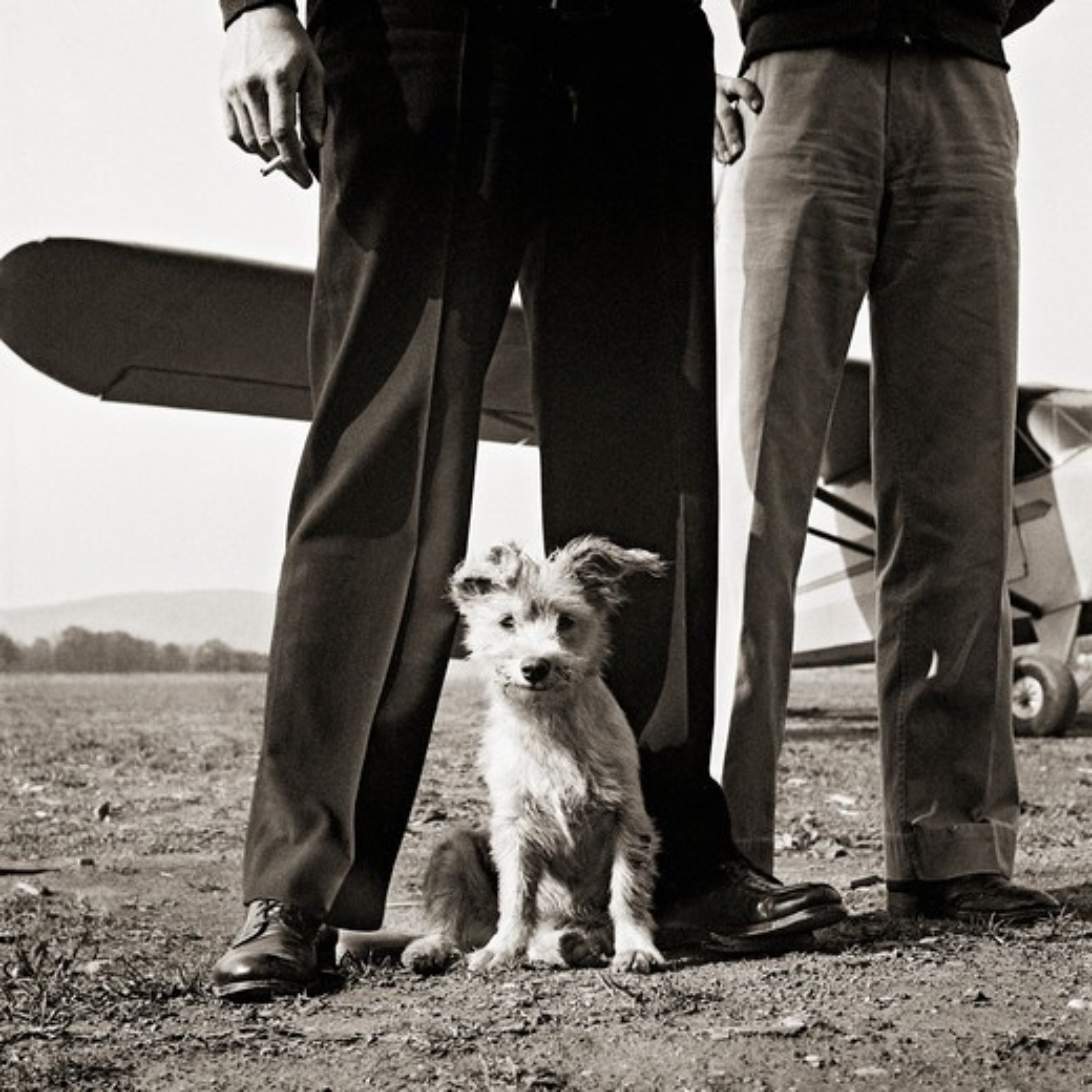 Stock Photo: 4388-735 Airport Dog