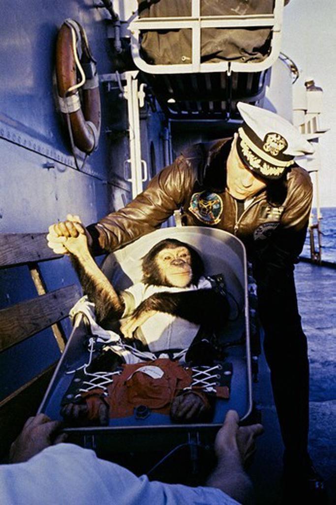 Stock Photo: 4389-2259 Retrieving Ham the Chimp