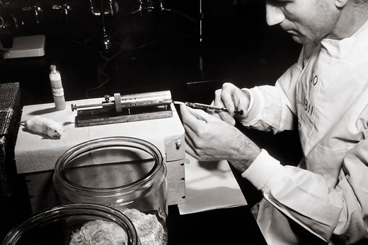 Stock Photo: 4391-291 W. Heston giving an intravenous injection to mice. Heston, around 1944, studied pulmonary tumors and heredity in mice with an attempt to localize tumor susceptibility to specific genes