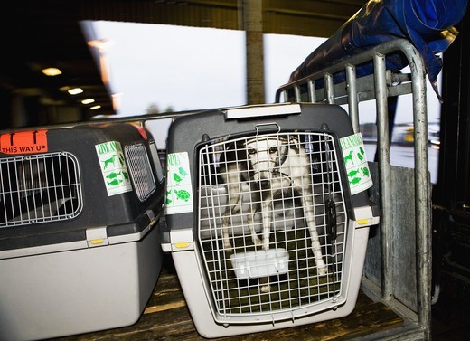 A dog in a travelling cage. : Stock Photo