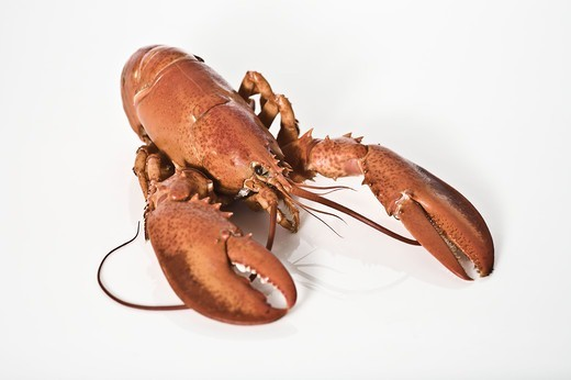 A lobster, close-up. : Stock Photo