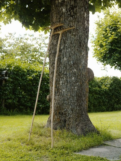 Two rakes leaning against a tree trunk, Sweden. : Stock Photo