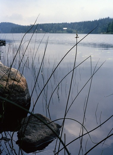 Stock Photo: 4400R-5841 A lake, Sweden.