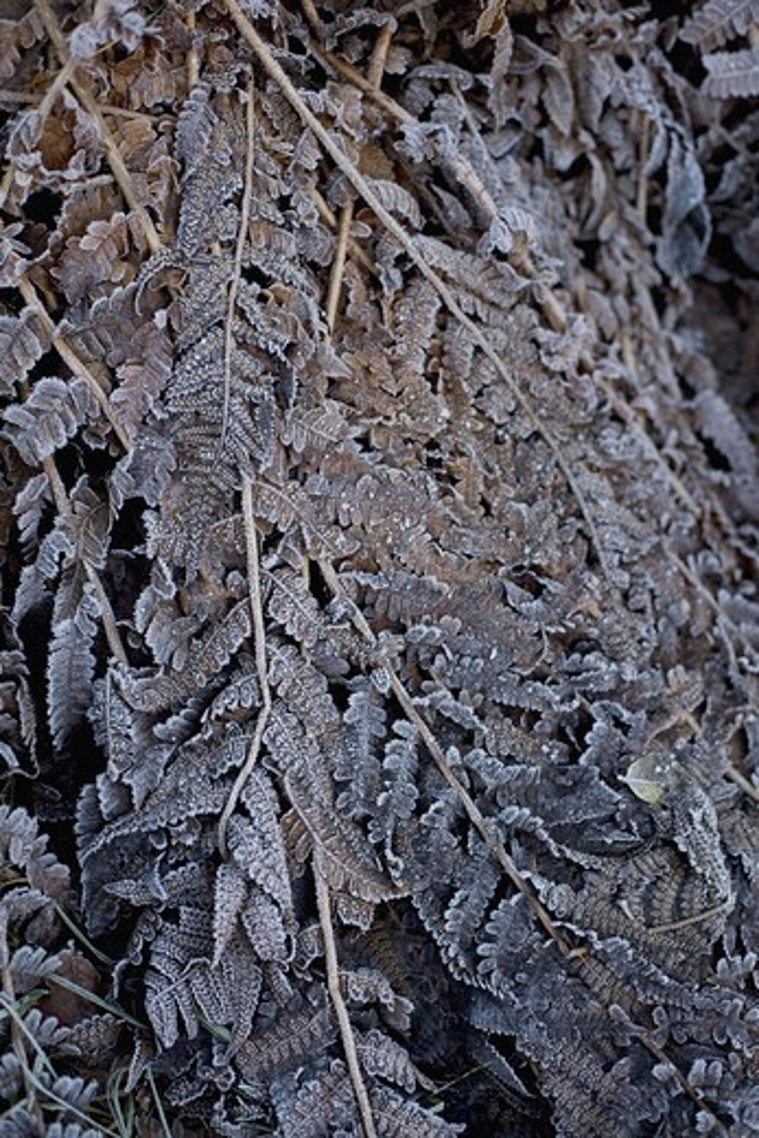 Stock Photo: 4400R-5895 Winter in the garden, Sweden.