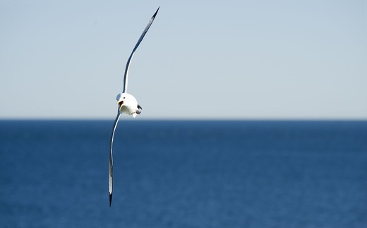 Seagull mid air : Stock Photo