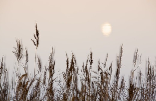 Stock Photo: 4401R-13175 Grass and sun, out of focus