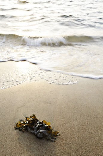 Stock Photo: 4401R-14441 Seaweed on sandy beach