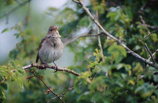 Stock Photo: 4401R-1602 Bird perched on branch