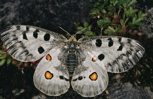 Stock Photo: 4401R-1799 Butterfly, close-up