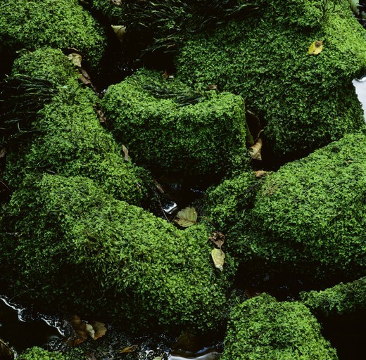 Stock Photo: 4401R-1980 Rocks covered with moss