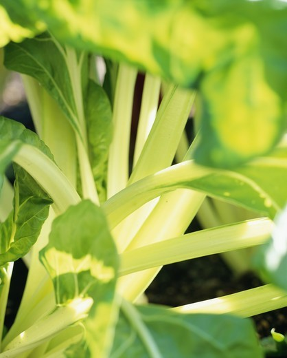 Stock Photo: 4401R-2437 Plants, close-up