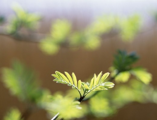 Stock Photo: 4401R-2494 Green leaves, close-up