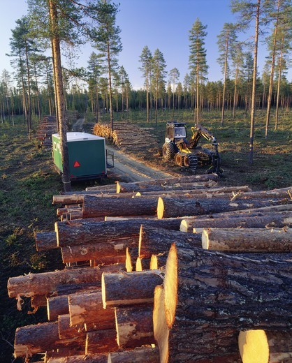 Pile of logs in forest : Stock Photo