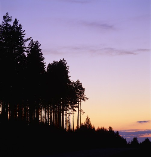 Silhouette of trees against sky : Stock Photo