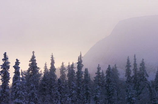 Stock Photo: 4401R-3484 Midwinter frost fog