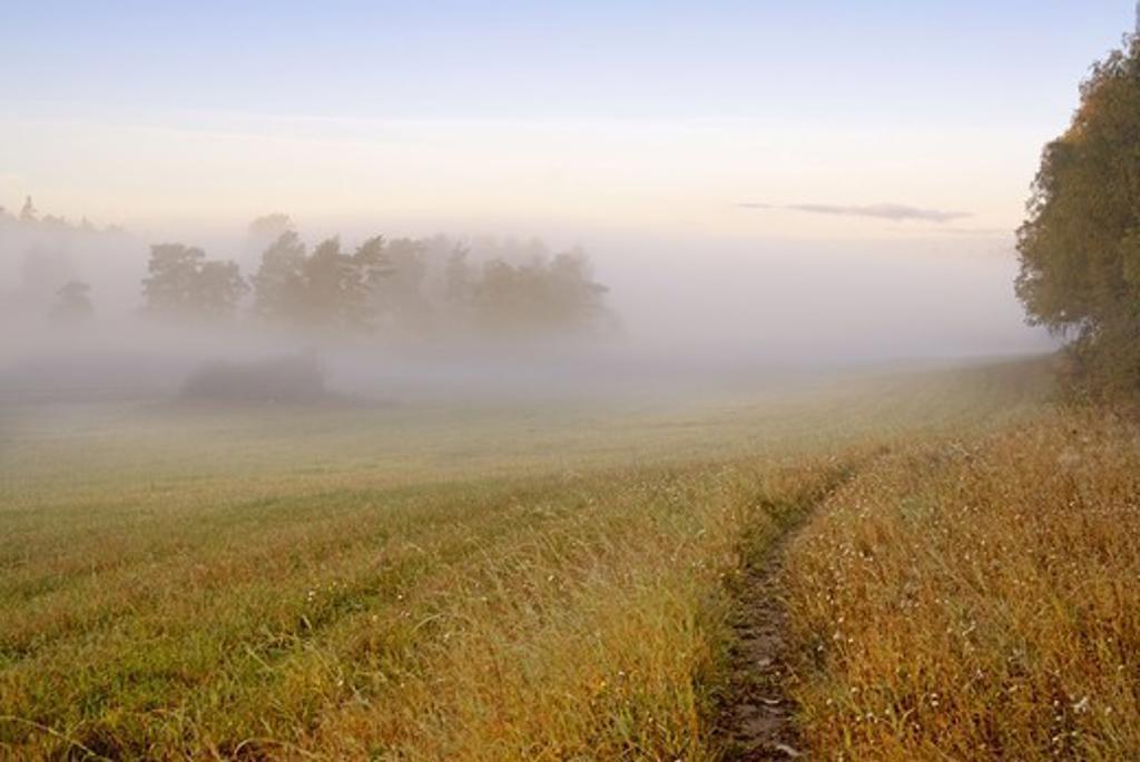 Stock Photo: 4401R-4343 Morning fog over landscape, Sweden.