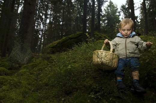 Stock Photo: 4401R-4577 A child picking mushrooms, Sweden.