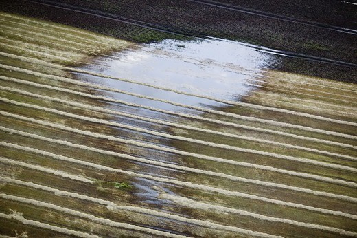 Stock Photo: 4401R-5257 Watery fields, Skane, Sweden.