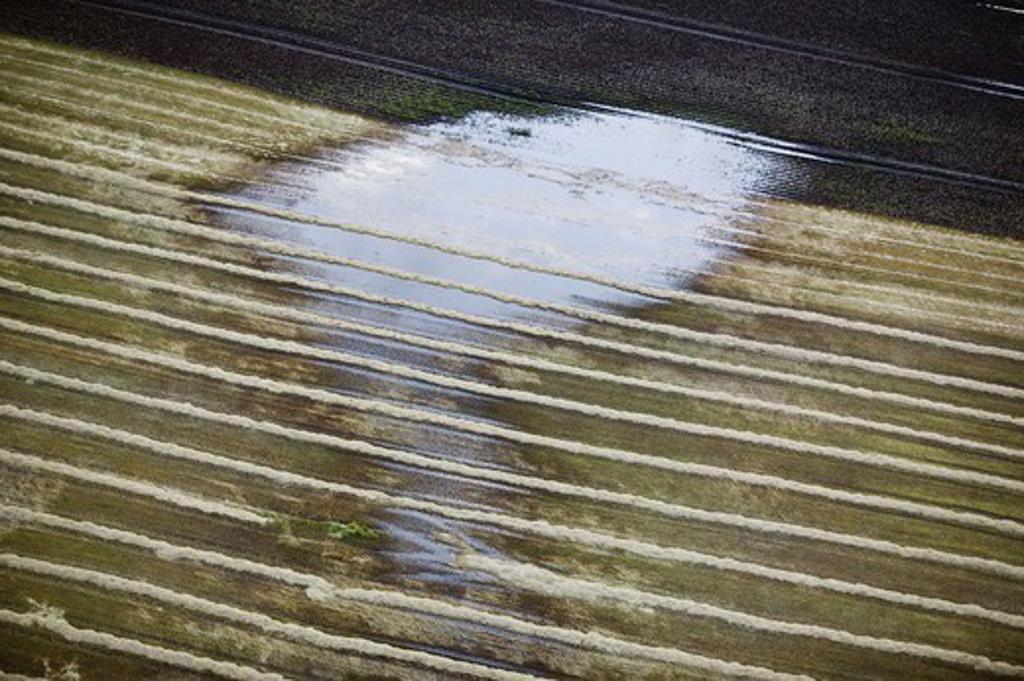 Watery fields, Skane, Sweden. : Stock Photo