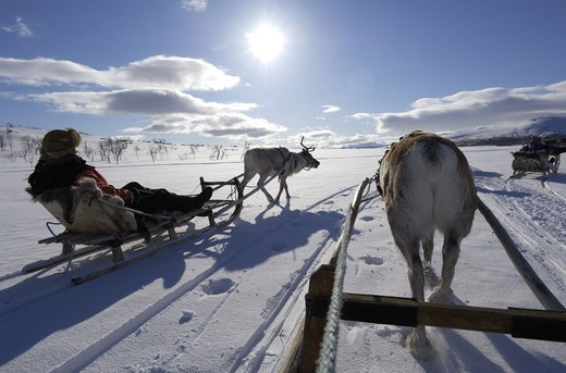Stock Photo: 4401R-6335 Reindeer sledding ecotourism tour, Sweden.