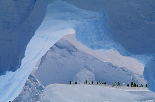 Stock Photo: 4401R-7089 Emperor Penguins, the Antarctic.