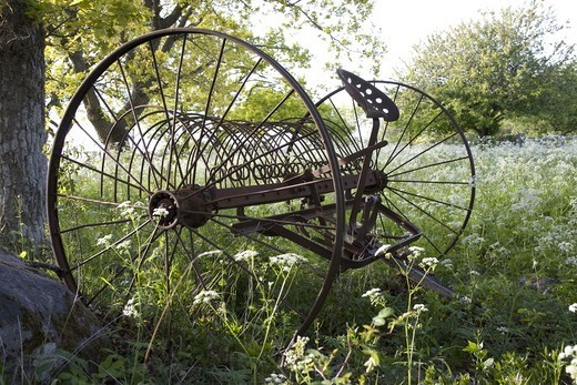 An old harrow, Oland, Sweden. : Stock Photo