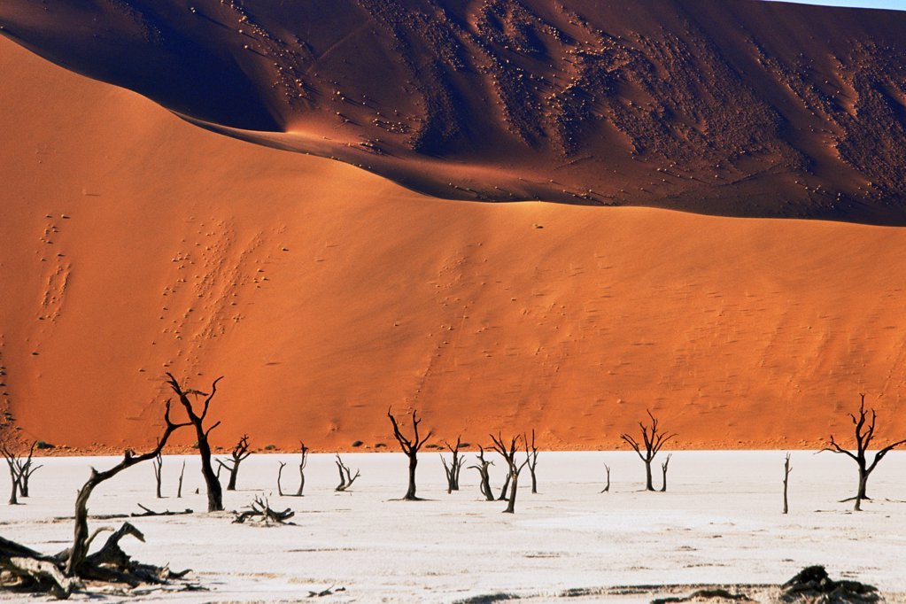 Stock Photo: 4402-3836 Dead Vlei, Sossusvlei, Namibia