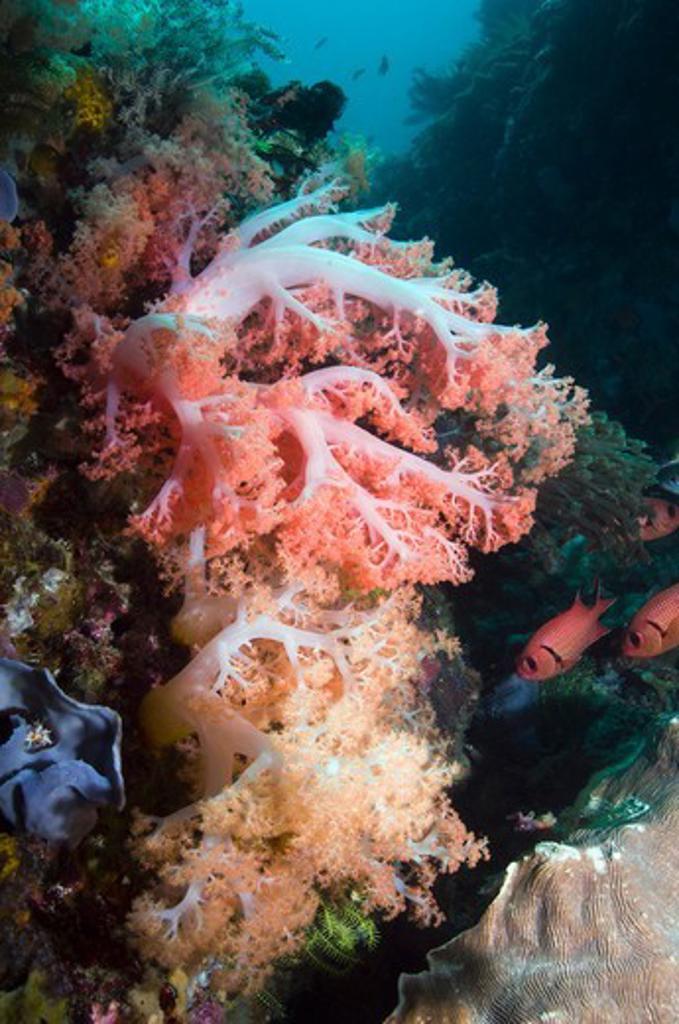 Stock Photo: 4402-5836 Tree coral, Rinca, Komodo National Park, Indonesia.