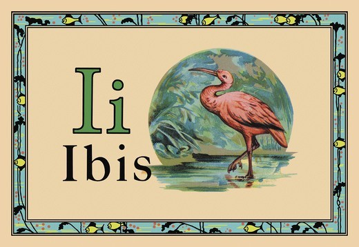 Stock Photo: 4408-10127 Ibis, Animal Alphabet