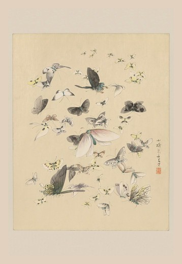 Stock Photo: 4408-12472 Butterflies 2, Japanese Prints