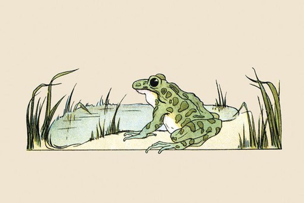Pond Frog, Victorian Children's Literature : Stock Photo