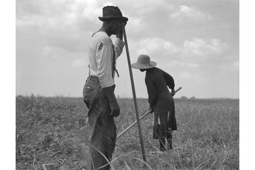 Cotton sharecroppers, Dorothea Lange : Stock Photo