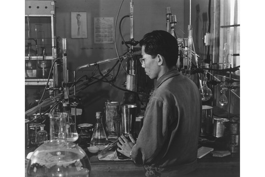 Stock Photo: 4408-2244 Frank Hirosama [i.e., Hirosawa] in laboratory, Ansel Adams