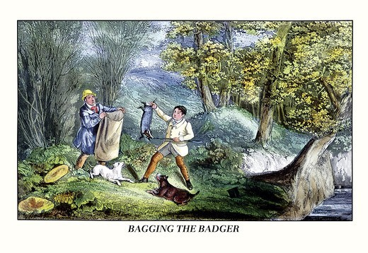 Stock Photo: 4408-6368 Bagging the Badger, Dogs