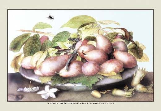 Stock Photo: 4408-8869 Dish of Plums, Nuts, Jasmine and a Fly, Giovanna Garzoni