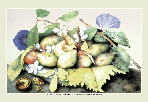 Stock Photo: 4408-8871 Dish of Plums with Jasmine and Walnuts, Giovanna Garzoni