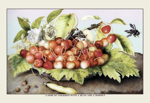 Stock Photo: 4408-8876 Dish of Cherries With a Bean and a Hornet, Giovanna Garzoni